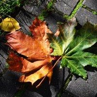 Красок яркие тона, листья клёна уже шуршат под ногами. :: Татьяна Помогалова