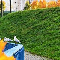 И чайки любуются красками осени. :: Татьяна Помогалова