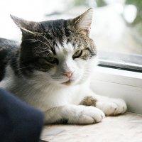 Мой котик!!! :: Светлана Масленникова