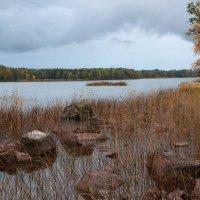 Утро в октябре :: liudmila drake