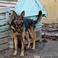 собачья жизнь :: Dmitry i Mary S
