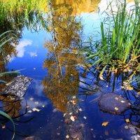 Осень в Ботаническом саду. (2) :: Николай Кондаков