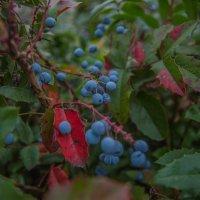 Осенние краски :: олеся тронько
