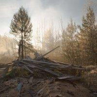 Осенний хаос.... :: Sergey Apinis