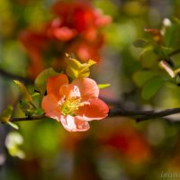 Красота... :: isanit Sergey Breus