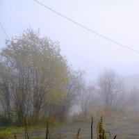Туманный день... :: Анна Приходько