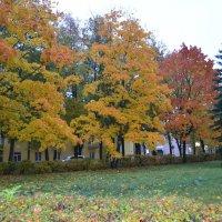 Великие Луки. Клёны в октябре... :: Владимир Павлов