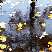 Дождь в Октябре. :: Марина Харченкова