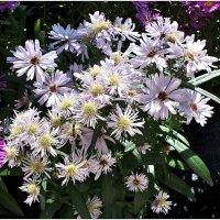 Цветы осени. :: Валерия Комова
