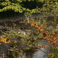 Осень в ущелье :: Gal` ka