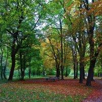 С октябрём пришло волшебство. Оно затаилось в шорохе оранжевых и красных листьев....... :: Galina Dzubina