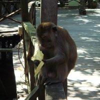 Обезьяна с бананом :: spm62 Baiakhcheva Svetlana
