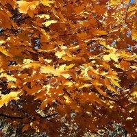 Осеннее золото.... :: Владимир Бровко