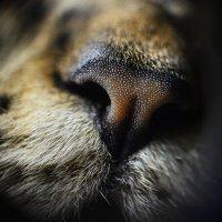 Я часто вижу этот нос, но не так близко:) :: Полина Дюкарева
