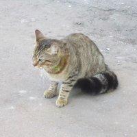 Простая серая кошка :: Дмитрий Никитин
