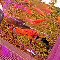 Рыбки в аквариуме. :: Виктор Егорович