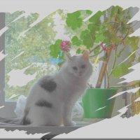 кошка на окошке :: Юлия Денискина