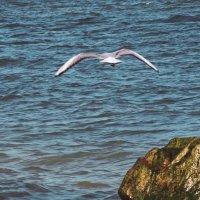 полет над морем :: mAri