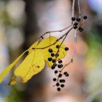 Вот и осень пришла. :: Виктор Иванович