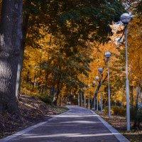 Осень :: Владимир Дальский
