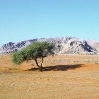 Пустынная пустыня :: Андрей K.