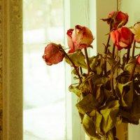 Розы :: Lena Veter