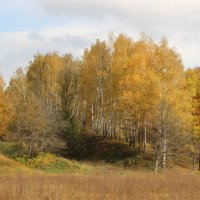 Золотая осень. :: Ирина Королева