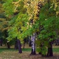 Осень радует красотой, чтобы нам легче было встретить зиму. :: Татьяна Помогалова