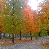 Осень в парке. :: Чария Зоя