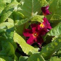 Цветы у дома :: Фотогруппа Весна.