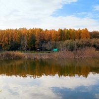У осеннего пруда :: Андрей Заломленков