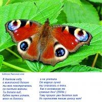 Бабочка Дневной Павлиний Глаз :: Генрих Сидоренко