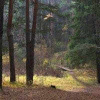 Полянка в лесу. :: Наталья