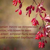 Осенняя открытка. :: Лилия *
