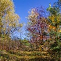 Осень ! :: Владимир