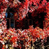 Два окна в Осень :: олег свирский