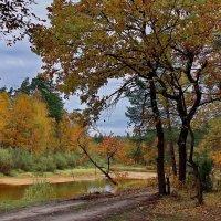 В листопадной грусти берега... :: Лесо-Вед (Баранов)