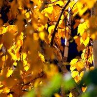 Шумят... шумят в саду... :: Валерия  Полещикова