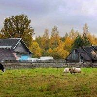 Осень золотая в моем поселке :: Павлова Татьяна Павлова