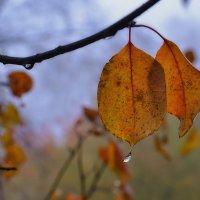 Осень грустит. :: Виктор Иванович