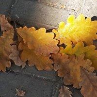 Осень на тротуаре :: Светлана