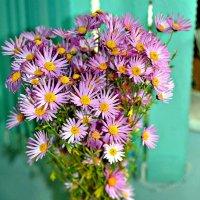 Цветы осени... :: Михаил Столяров