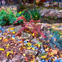 Осень во дворе :: Николай Николенко