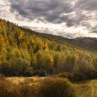 осенний лес :: Екатерина Агаркова