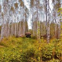 Раз - два,  раз - два...будут на зиму дрова.. :: Алла Кочергина