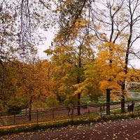 Краски Осени. :: Марина Харченкова