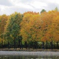 Осень золотая :: Дмитрий Никитин