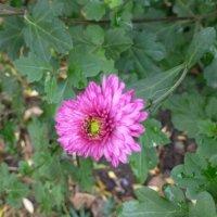 Цветы октября :: Наиля