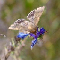 бабочка :: Ольга (Кошкотень) Медведева