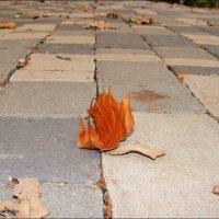 Уносит листья Осень... :: °•●Елена●•° ♀
